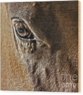 Eye Of The Horse Wood Print