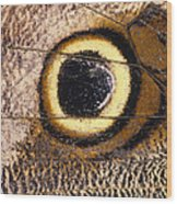 Eyespot On Wing Of Butterfly, Eriphanis Polyxena Wood Print
