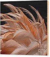 Fabulous Flamingo Feathers Wood Print