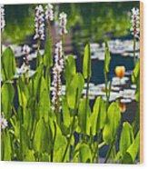 Fabulous Water Hyacinth  Wood Print