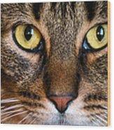Face Framed Feline Wood Print by Art Dingo