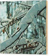 Faery Forest Wood Print