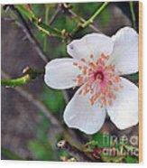 Fairy Crystal Rose-vi Wood Print