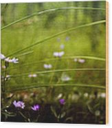 Fairy Meadow Wood Print