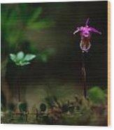Fairy Slipper Orchid Calypso Bulbosa Wood Print