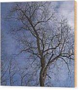 Fairy Tale Tree Wood Print