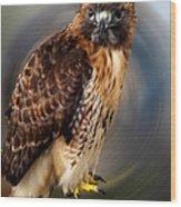 Falco 2 Tinnunculus Vf Wood Print