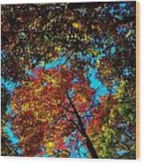 Fall Arrives ... Wood Print