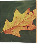 Fall Away Wood Print