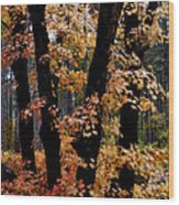 Fall Beckons  Wood Print