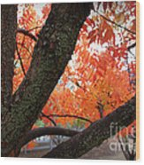 Fall Branches Wood Print