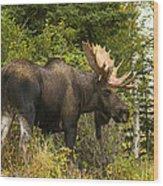 Fall Bull Moose Wood Print