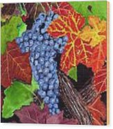 Fall Cabernet Sauvignon Grapes Wood Print by Mike Robles