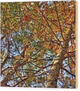 Fall Canopy Wood Print