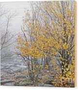 Fall Color And Fog Wood Print