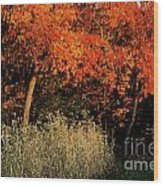 Fall Colors 2 Wood Print