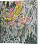 Fall Colors In Spanish Moss Wood Print