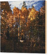 Fall Colors Taylor Creek. Wood Print