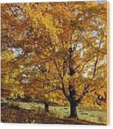 Fall Colours In Eastern Townships Wood Print
