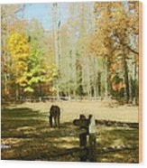Fall Corral Wood Print