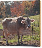 Fall Cow Wood Print