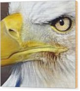 Fall Eagle 3 Wood Print