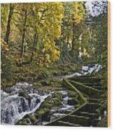 Fall Fish Ladder Wood Print
