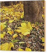 Fall Floor Wood Print