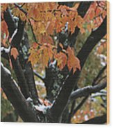 Fall Foliage Of Maple Tree After An Wood Print by Tim Laman