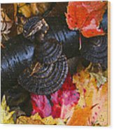 Fall Fungi Wood Print