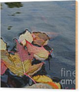 Fall Gathering Wood Print
