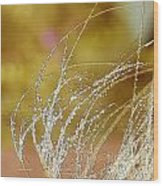 Fall Grass Wood Print by Artist and Photographer Laura Wrede