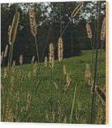 Fall Grasses Wood Print