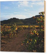 Fall In A Sonoma Vineyard Wood Print