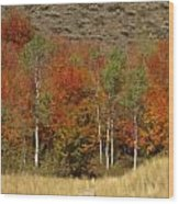 Fall In Snake River Canyon Wood Print