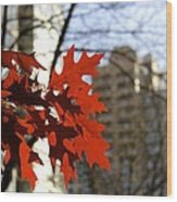 Fall In The City 2 Wood Print