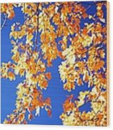 Fall Is In The Air Wood Print