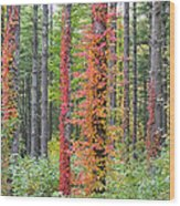 Fall Ivy On The Trees Wood Print