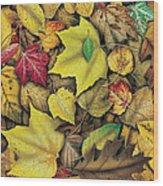 Fall Leaf Study Wood Print by JQ Licensing