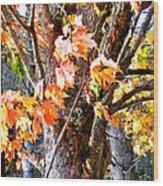 Fall Leaves 2 Wood Print