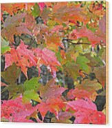 Fall Leaves Filtered Wood Print