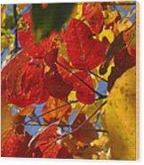 Fall Leaves Flp Wood Print
