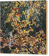 Fall Leaves Over Florida Pond Wood Print