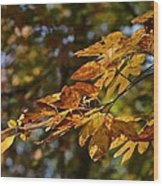 Fall Leaves Part One Wood Print