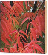 Fall Leaves Red 5 Wood Print