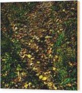 Fall Lined Trail Wood Print