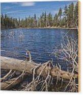 Fall Logs On Reflection Lake Wood Print