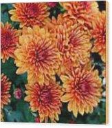 Fall Mums Wood Print