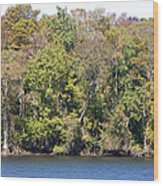 Fall On The Suwannee River Wood Print
