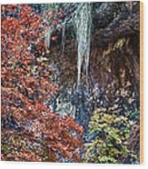 Fall Scene At Lost Maples Wood Print